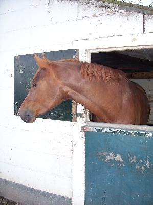 De oude stal