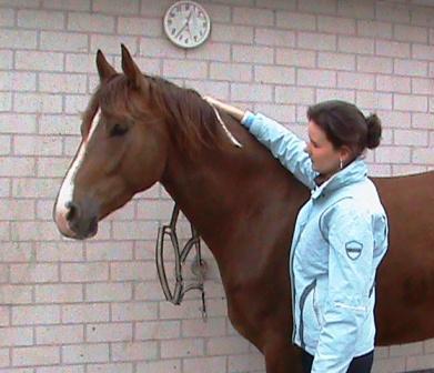 Wendy Tijssen laat zien hoe je een halster omdoet
