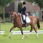 Figaro op zijn eerste wedstrijd 6-9-2015 draf volte