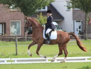 Figaro op zijn eerste wedstrijd 6-9-2015 linker galop